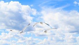 Die Seemöwen im Himmel Lizenzfreies Stockbild