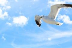 Die Seemöwen im Himmel Lizenzfreies Stockfoto