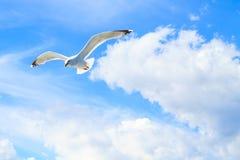 Die Seemöwen im Himmel Lizenzfreie Stockbilder