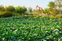 Die Seerose blüht Pool- und Ölsaugmaschine Stockfoto