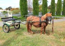 Die Shetlandinseln-Pony mit Buggy Stockfoto