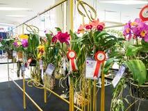 Die Siegerorchideen in Musterbangkok-Orchideenparadies 2014 Stockfotografie
