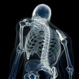 Die skelettartige Rückseite lizenzfreie abbildung