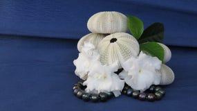 Die Skelette von Seeigel-, weißen flouers und von schwarzen Perlen Stockbild