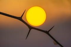 Die Sonne Lizenzfreies Stockfoto