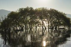 Die Sonne, die Bäume wachsen im Wasser Stockbilder