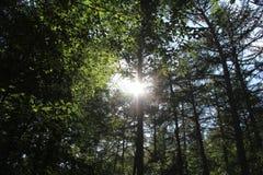 Die Sonne durch die Bäume stockbilder