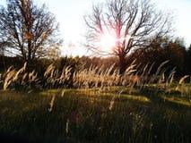 Die Sonne durch die Niederlassungen Lizenzfreie Stockfotografie