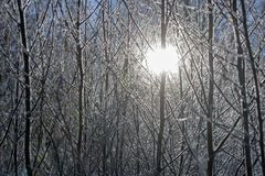 Die Sonne, die durch die gefrorenen Büsche an einem Wintertag scheint Lizenzfreie Stockfotografie