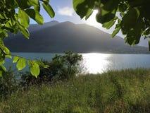 Die Sonne erweitert sich auf den grünen Blättern und dem See Stockfotografie