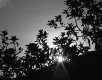 Die Sonne hinter dem Baum Stockfotografie