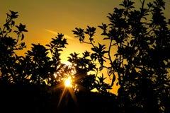 Die Sonne hinter dem Baum Lizenzfreie Stockfotos