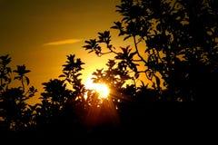 Die Sonne hinter dem Baum Stockbild