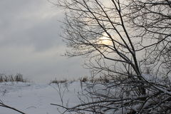 Die Sonne hinter dem Baum Lizenzfreies Stockbild