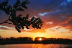 Die Sonne hinter der Niederlassung Stockfotos