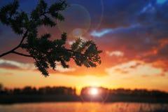 Die Sonne hinter der Niederlassung Lizenzfreie Stockfotografie