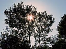 Die Sonne hinter einem Baum lizenzfreie stockfotografie