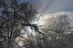 Die Sonne im Winterwald Stockfotos