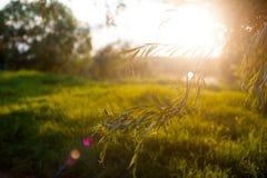 Die Sonne ist durch die Blätter glänzend Abstrakte natürliche Hintergründe mit Schönheit bokeh Abstrakte natürliche Hintergründe  Stockfotografie