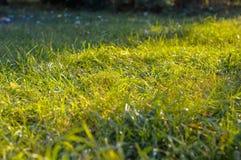 Die Sonne ist durch das grüne Gras glänzend Stockbild