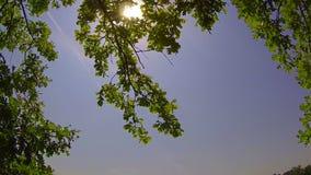 Die Sonne ist durch die grünen Blätter glänzend