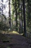 Die Sonne ist glänzender Abstieg zwischen den Bäumen Stockfotografie