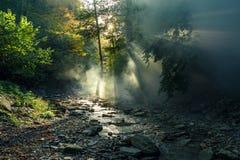 Die Sonne ` s Strahlen machen ihre Weise durch den Morgennebel gegen den Hintergrund von einem Gebirgsfluss und von Waldmalerisch lizenzfreie stockbilder