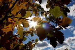 Die Sonne ` s Strahlen sickern durch der Herbstlaub durch stockbilder