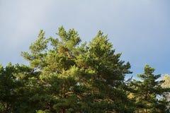 Die Sonne ` s warmen Strahlen machen ihre Weise durch das Laub an einem Herbsttag stockfotos