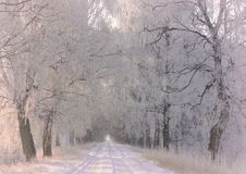 Die Sonne scheint das Gleis, Schnee, Holz Litauische Landschaft lizenzfreie stockfotografie