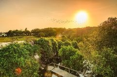 Die Sonne, die Vögel und die Bäume lizenzfreies stockfoto