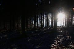 Die Sonne wird zwischen den Bäumen eingeschlossen Stockbild
