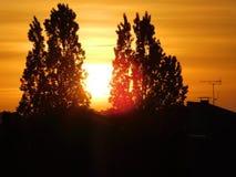 Die Sonne zwischen zwei Bäumen lizenzfreies stockbild