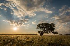 Die Sonneeinstellung hinter einem Baum Stockfotografie