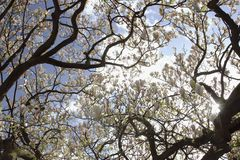 Die sonnige Magnolie lizenzfreie stockfotografie