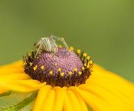 Die Spinne Lizenzfreie Stockfotografie