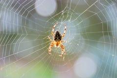 Die Spinne Stockbild