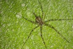 Die Spinne auf der Wand Stockfoto