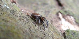 die Spinne geht auf einen hölzernen Baum stockbild