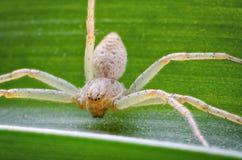 Die Spinne im Gras Lizenzfreie Stockfotos