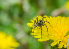 Die Spinne im Gras Stockbilder