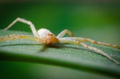 Die Spinne im Gras Stockfoto