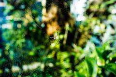 Die Spinne im Netz Stockbild