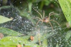 Die Spinne im undeutlichen natürlichen Hintergrund Lizenzfreie Stockfotos