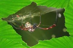 Die Spinne mit Blattrahmen Lizenzfreies Stockfoto