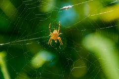 Die Spinne in seinem Netz Lizenzfreie Stockbilder