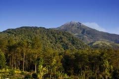 Die Spitze des Bergs Welirang Stockbild