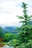 Die Spitze des Weihnachtsbaums auf dem Hintergrund von Bergen im Nebel lizenzfreie stockfotos