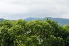 Die Spitzen der Bäume und des Himmels, die Berge sind blau Waldlandschaft im Abstand Ukraine, Karpaten lizenzfreie stockfotografie