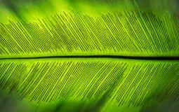 Die Spore des grünen Farnblattes Stockbild